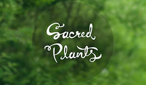 /works/2014/sacred-plants