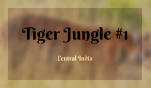 /works/photography/2017/tiger-jungle-central-india